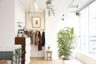 観葉植物を置くと運気が上がる。造花やフェイクグリーンは?